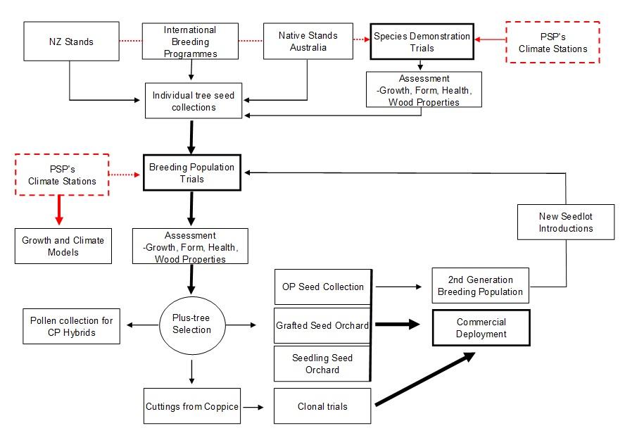 NZDFI Breeding Plan