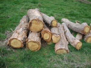Logs ready for milling