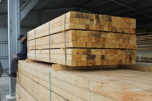 Vineyard stakes - one of the target markets for ground-durable timber.