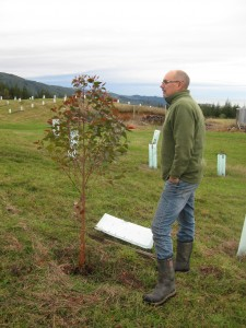 Roger with 2-yr old E globoidea (2013 plantings)